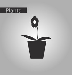 Black and white style icon flowers in a pot vector