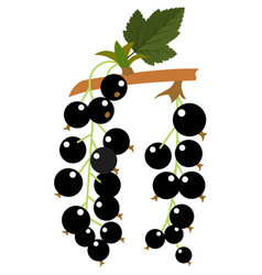Black currant forest berries flat icon vector