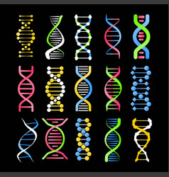 dna helix symbol of spiral human gene cell vector image