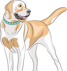 Labrador c vector