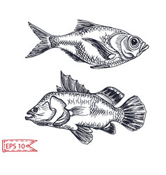 Sketch - fish hand drawn vector