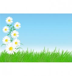 chamomiles with green grass vector image