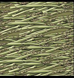 seamless pattern hand drawn asparagus vector image