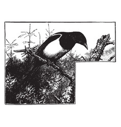 a magpie sitting on a tree branch looking down vector image