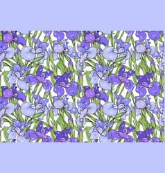 iris flowers purple and blue irises seamless vector image