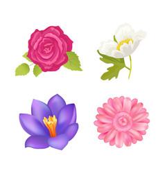 Rose and gerbera closeup vector