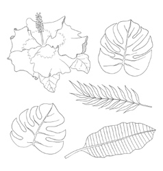 Set of leaves different species palm trees and vector