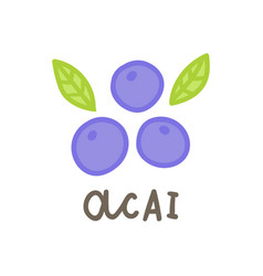 acai berries superfood vector image
