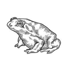 Hallucinogenic toad engraving vector