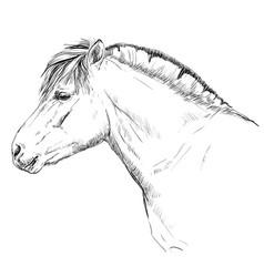 Norwegian fjord pony vector
