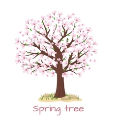 Spring blossom cherry tree vector image