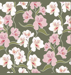 beautiful white pink alstroemeria lily flowers vector image