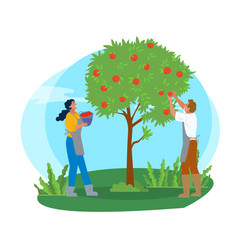 Couple picking apples in garden man and woman vector