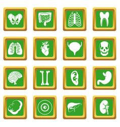 Human organs icons set green vector