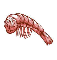 Shrimp meat icon organic food for appetizer vector
