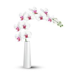 white orchids branch in ceramic vase vector image