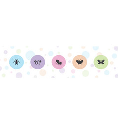 5 butterfly icons vector