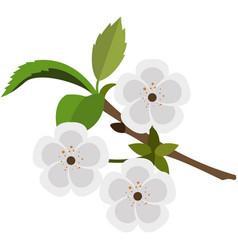 Blooming flowering fruit tree branch flat vector