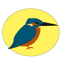 Common kingfisher on white background vector