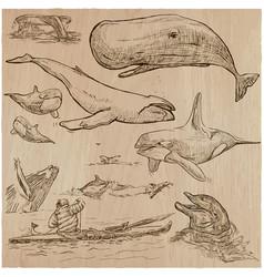 Cetaceans cetacea - an hand drawn pack sketching vector