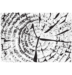 wood texture fiber and crack vector image