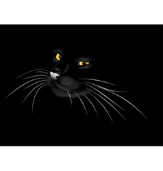 Black cat in the dark3 vector