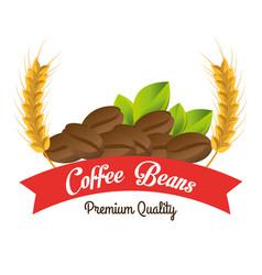 coffee beans premium quality vector image