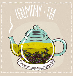 Glass teapot with tea with thyme vector