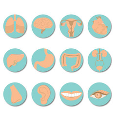 round icons of human organs set vector image