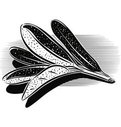 Sage leaves vector