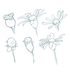 Sketch of floral elements for your design vector image