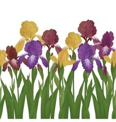 Flowers iris seamless vector
