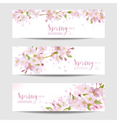 Spring Flower Banner Set - Cherry Blossom Tree vector