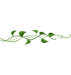 Twisted wild liana branch vector