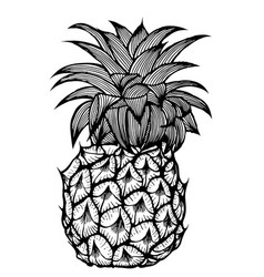 the pineapple sketch vector image
