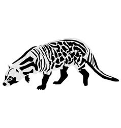 African civet vector