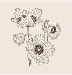 anemone flower drawing bouquet isolated vector image