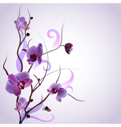 card with orchid branch vector image