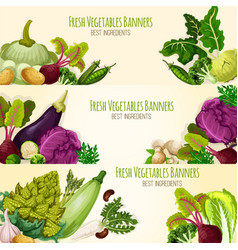 vegetables and fresh veggies banners set vector image