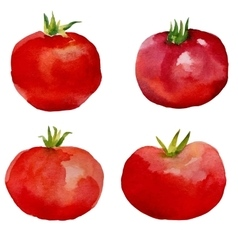 Watercolor set tomatoes vector image