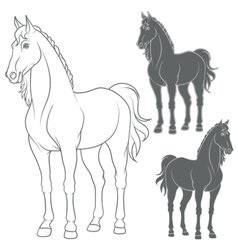 Set of with the horse vector image