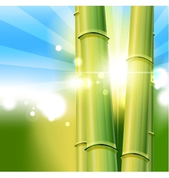 bamboo nature background vector image