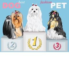 Fashion dog champion on podium vector