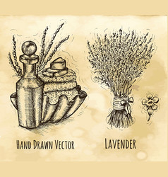 Vintage herbal still life with lavender flowers vector