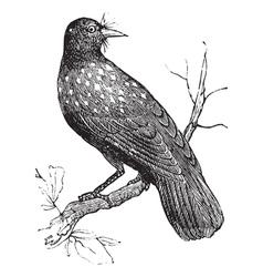 Nutcracker vintage engraving vector image