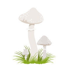 amanita phalloides poisonous mushrooms colorful vector image