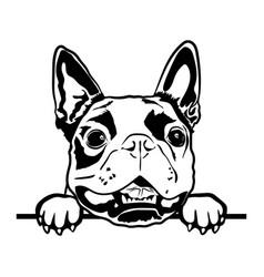 boston terrier svg cute svg files for cricut vector image