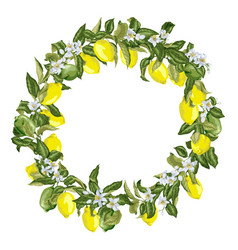 citrus wreath in graphic with blooming flowers vector image