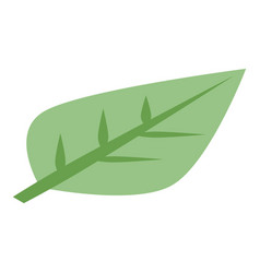 Persimmon leaf icon isometric style vector