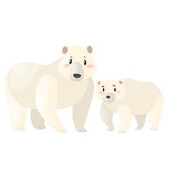 two polar bears on white background vector image